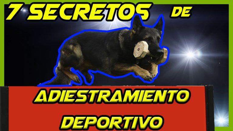 Adiestramiento Deportivo Ipo Igp