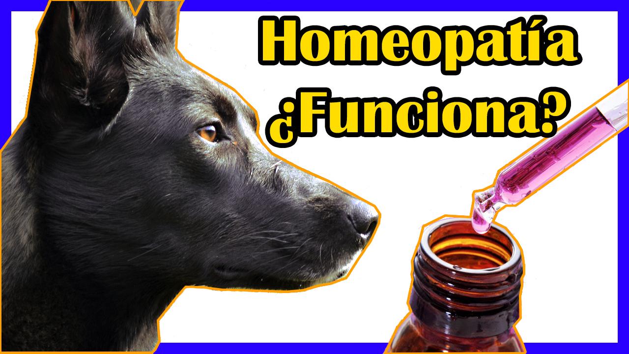 La Homeopatía Y Condroprotectores En Perros
