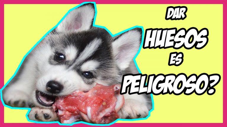 Los Huesos En La Dieta Barf Del Perro Son Buenos O Peligrosos Ok