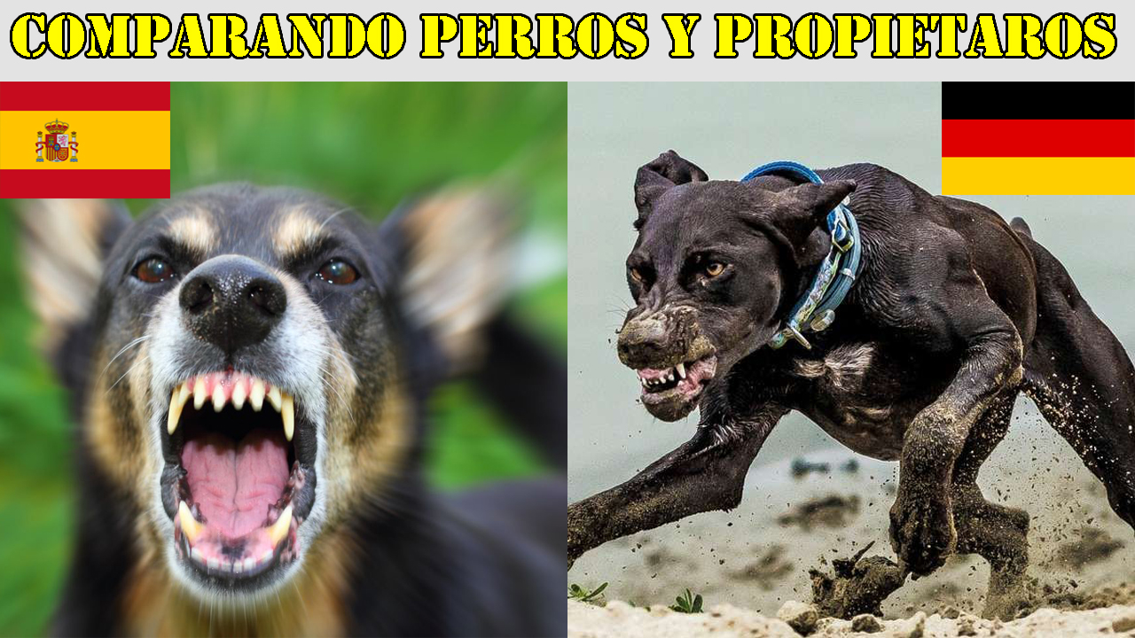 Perros España Alemania