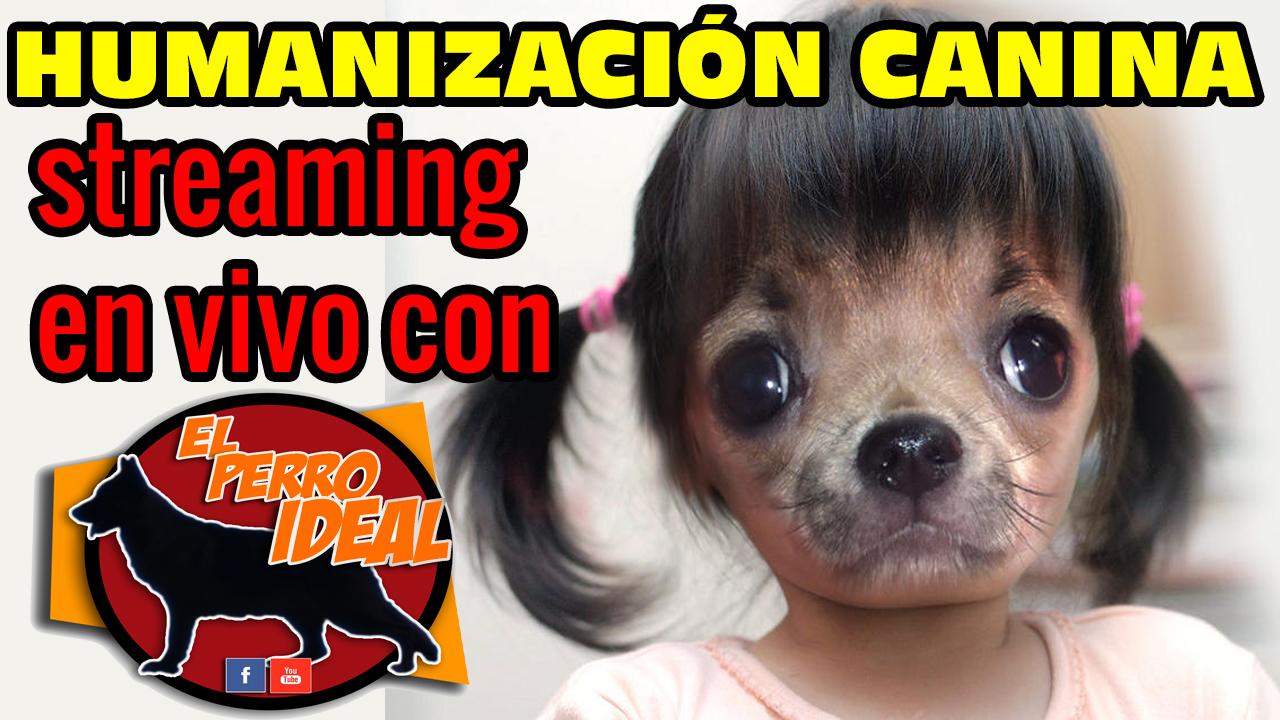Antropomorfismo Humanización Perros
