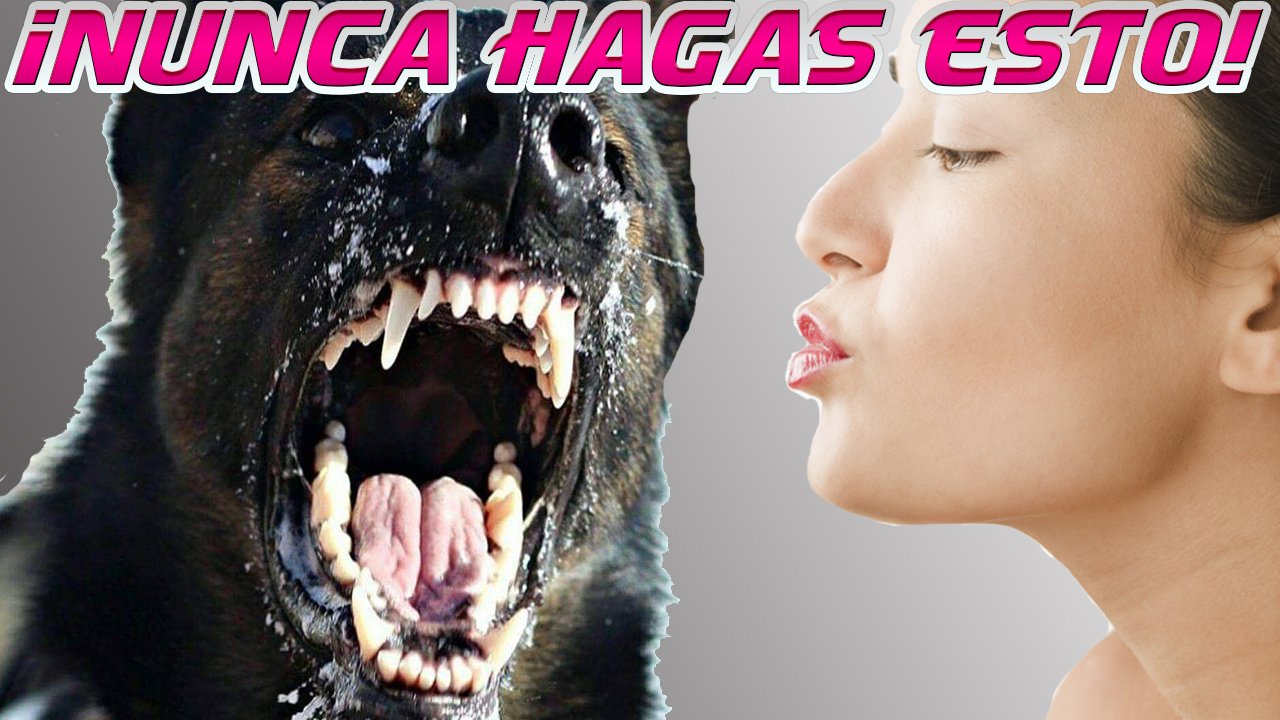 Perro Agresivo Bozal