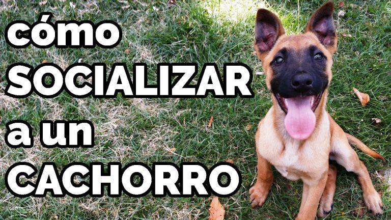 Socializar Perro Cachorro