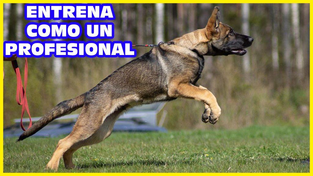 perros deportivos