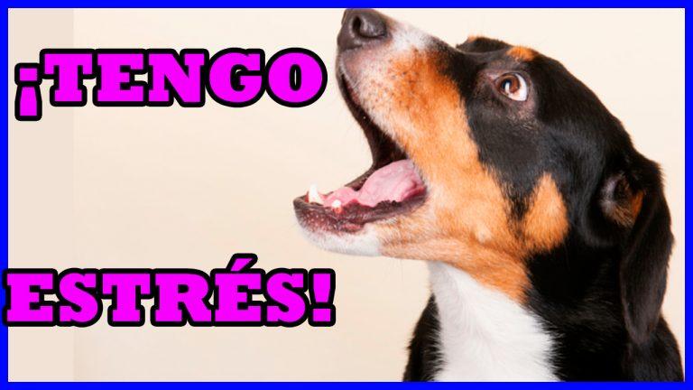 Estres Canino Ansiedad