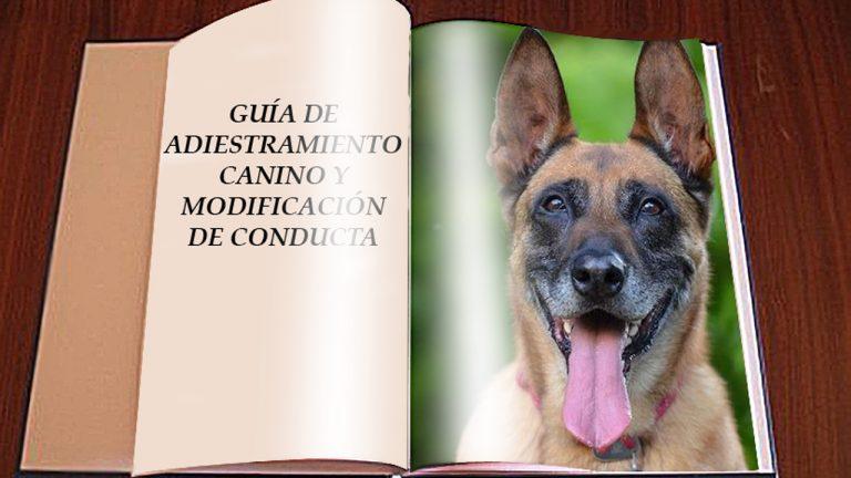 Adiestramiento Canino Modificación De Conducta