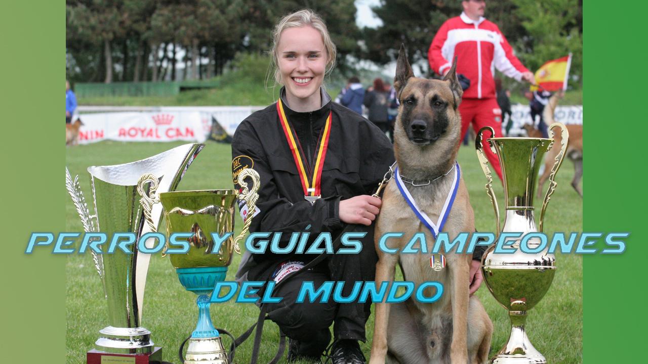 Perros Campeones