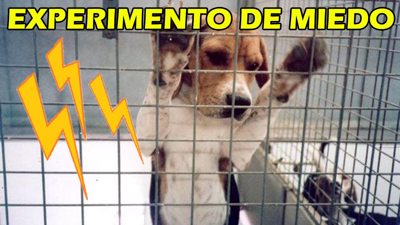 Experimento Con Perros
