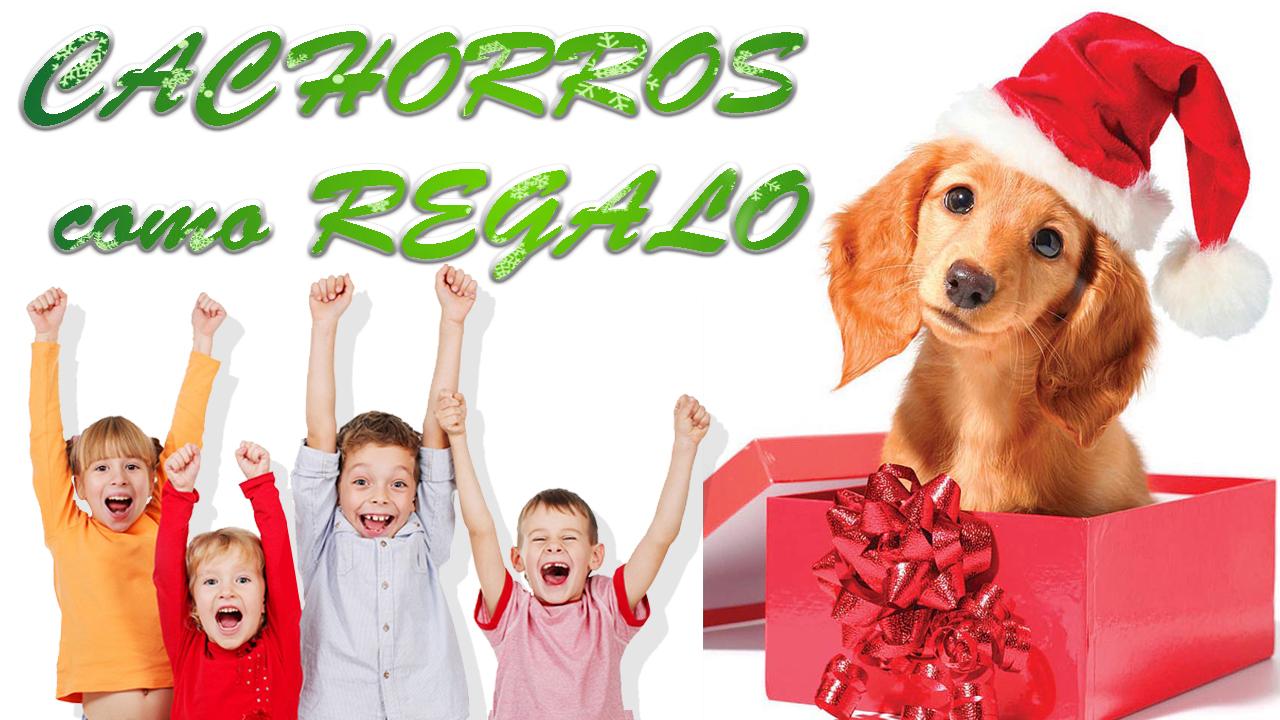 Cachorros Navidad