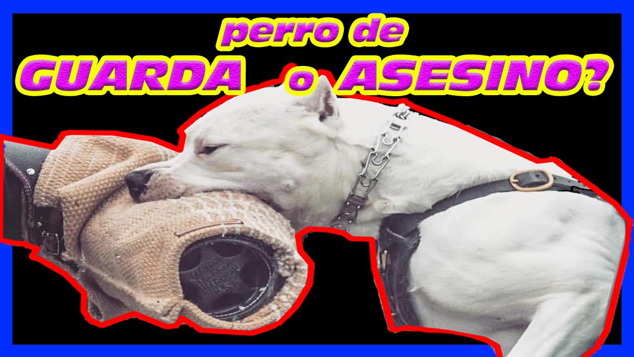 Perro De Guarda Y Protección