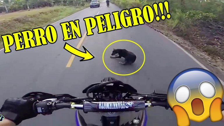 Perro En Peligro