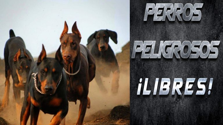 Perros Peligrosos Libres