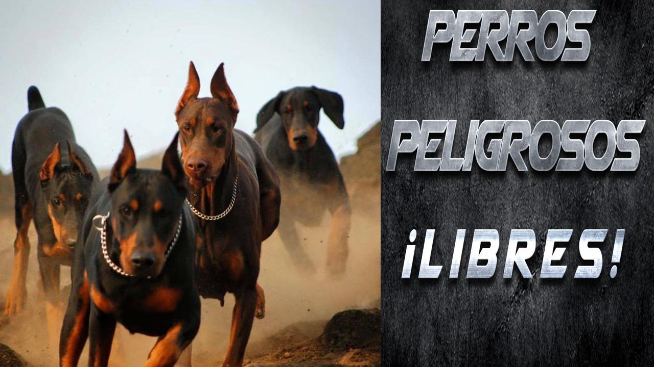 Perros Peligrosos Libres Ok
