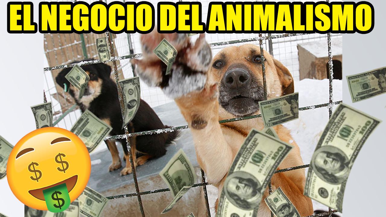 Protectoras Y Refugios Caninos
