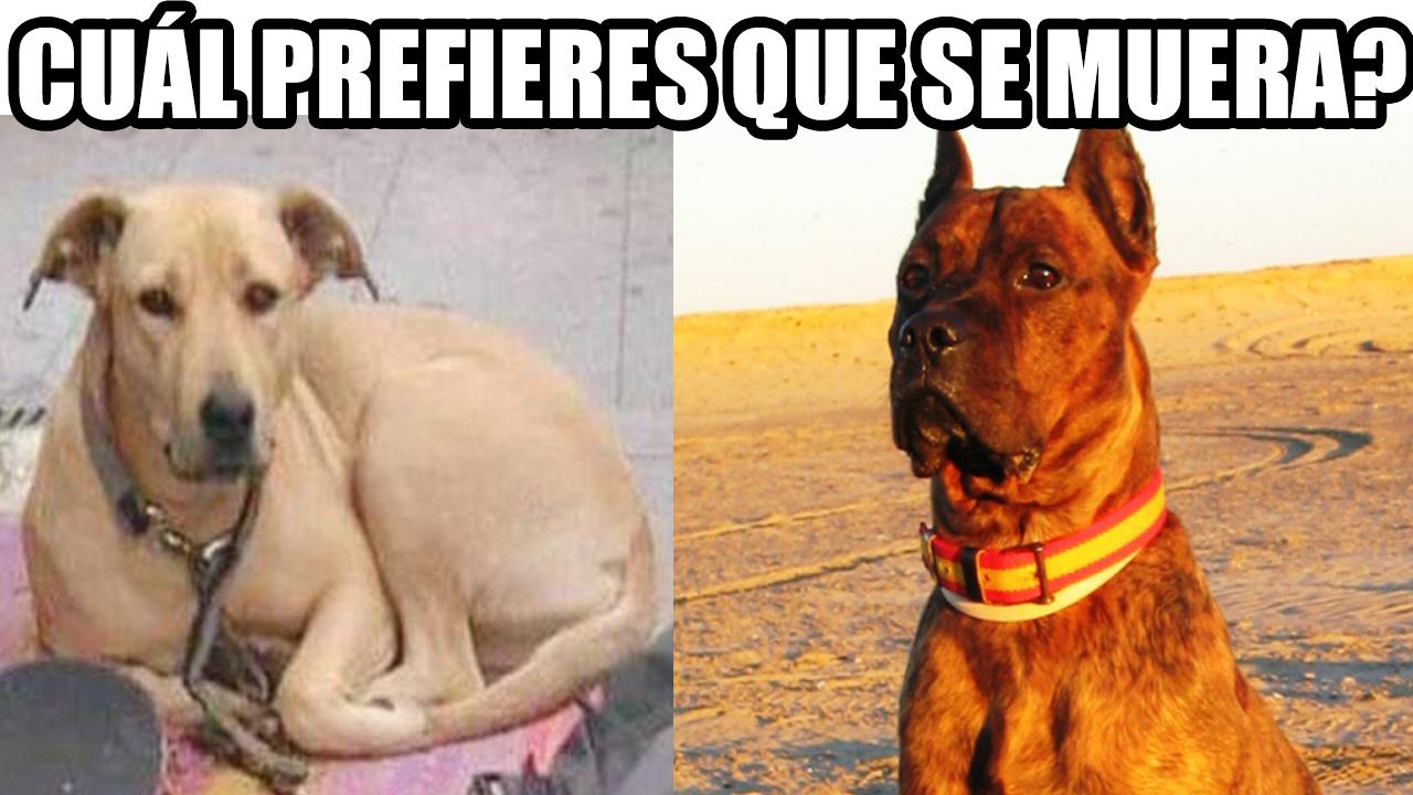 Perros Sota Alano