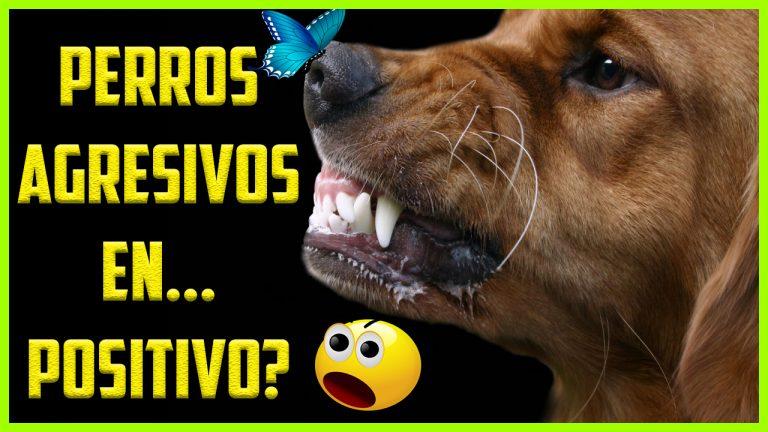 Adiestramiento En Positivo Para Perros Agresivos
