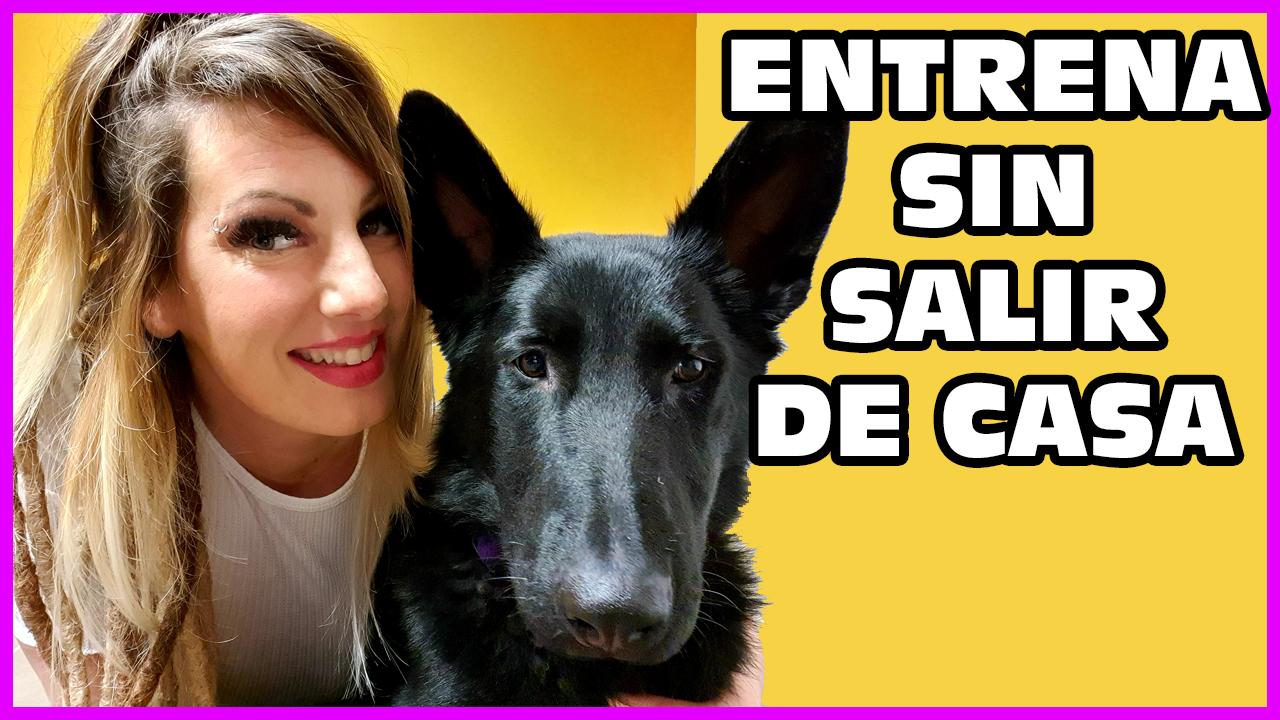 Silvia alfadog