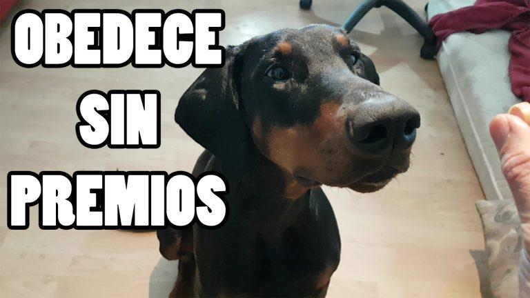 Truco Fácil Para Que El Perro Obedezca Sin Premios Ok